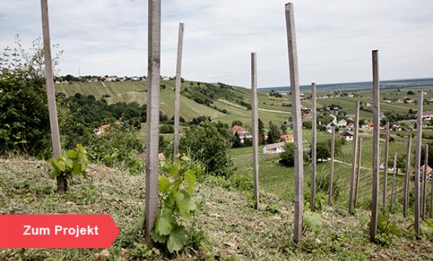 Zum Projekt - Crowdfunding Weinbau Uwe Schiefer